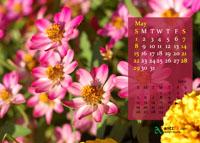 May - 2011 Calendar