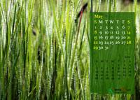 2011 Calendar - May