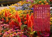 June - 2011 Calendar