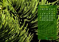 2011 Calendar - September