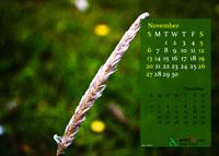 2011 Calendar - November