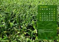 2011 Calendar - December