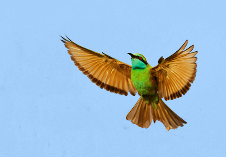 green bee eater Interview – Nisha Purushothaman