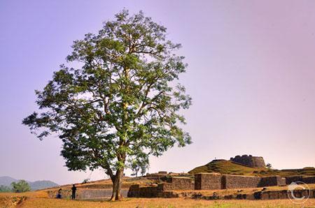 Nagara Fort Kudachadri