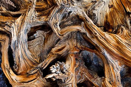 John Pedersen Interview - Twisted Root-M